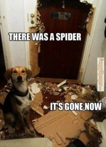 what kills spiders instantly