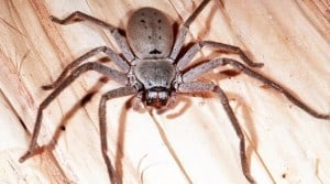 how to get rid of spiders in your house