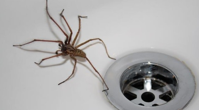 Does bleach repel and kill spiders find out the facts for How to stop spiders entering your house
