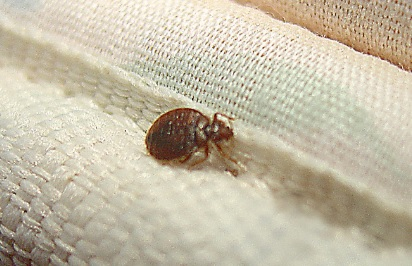 Does Alcohol Kill Bed Bugs Find Out If It Really Works