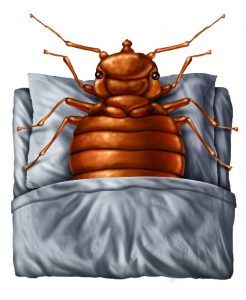 warm bed bugs