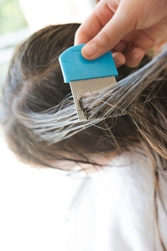 photo of a lice comb
