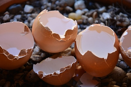 broken egg shells for slugs