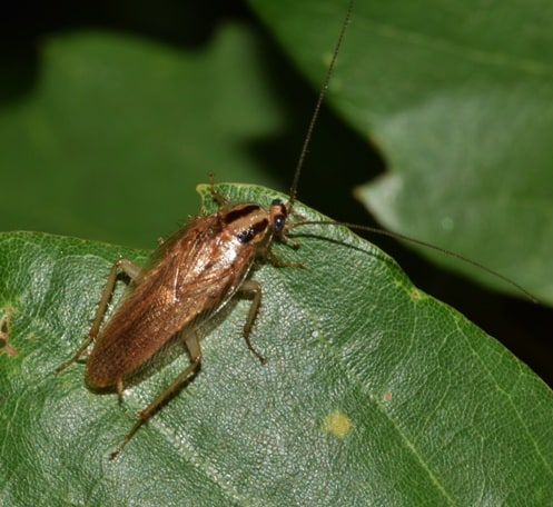 picture of a cockroach on a leaf